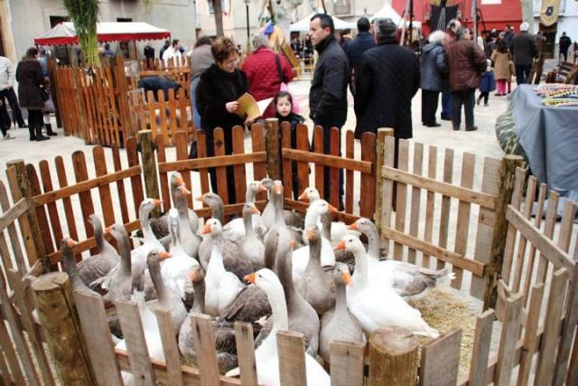 Fireta San Antoni en Muro de Alcoy - Muestra animales