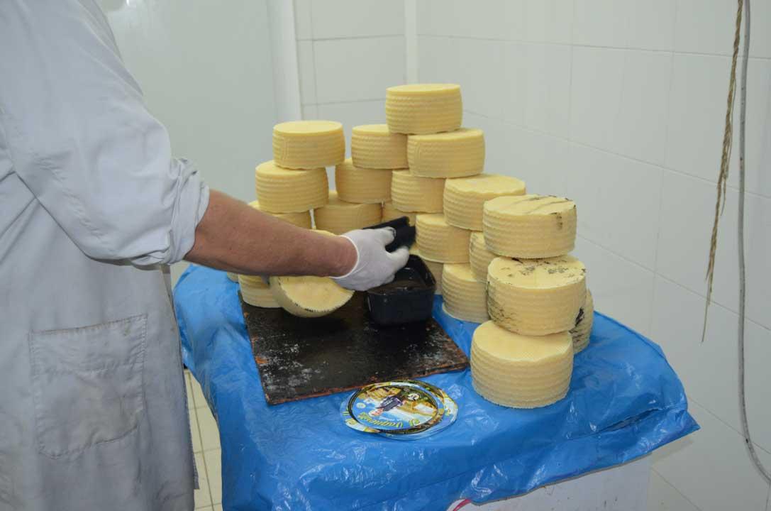 Elaboracion queso vaquerito